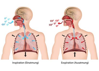 Atemwege – Funktion, Aufbau & Beschwerden | Gesundpedia.de