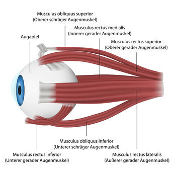 Augenzucken Ursachen Behandlung Vorbeugung Gesundpedia De