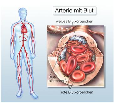 blut ist nicht steril