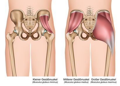 Gesäßmuskulatur: Funktion, Therapie, Diagnose, Behandlung, Anatomie