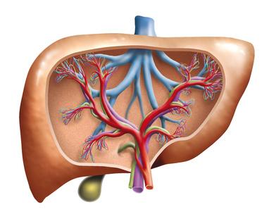 perforierte gallenblase symptome
