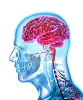 Kopf: Funktion, Therapie, Diagnose, Behandlung, Anatomie
