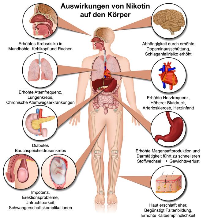 Rauchen und nikotinsucht wie wirkt nikotin der zigaretten im korper