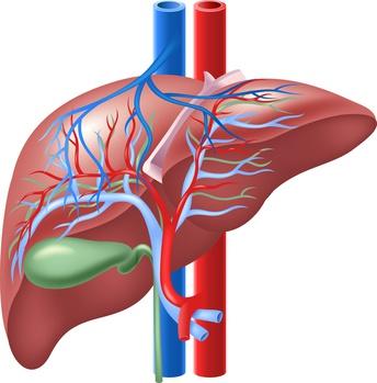 Pfortader: Funktion, Therapie, Diagnose, Behandlung, Anatomie