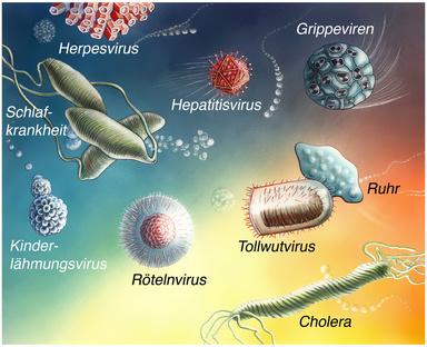 wirtszellen von viren