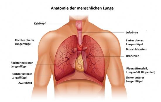 Der Krebs der Brust die Behandlung bis zu und nach der Operation
