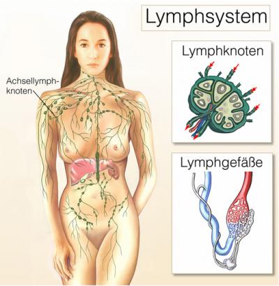 Lymphknotenschwellung – Ursachen, Behandlung & Vorbeugung ...