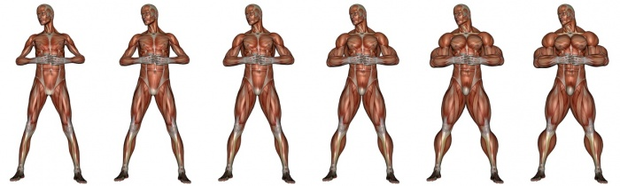 Muskelaufbau Nahrungsergänzung