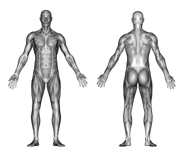 Muskeltraining – Gesundheits-Ratgeber & Lexikon | Gesundpedia.de